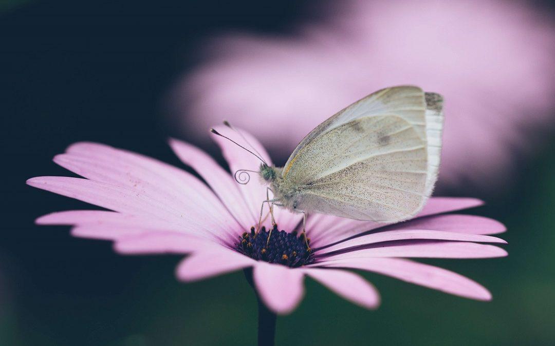 Wenn Deine Seele Deine Schönheit berührt